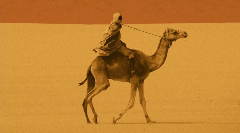 tłumacz z darfuru